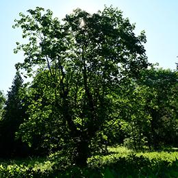 Field Arboretum