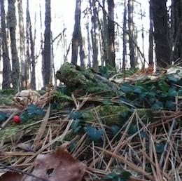 Upper Bowker's Woods