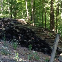 Lower Bowker's Woods