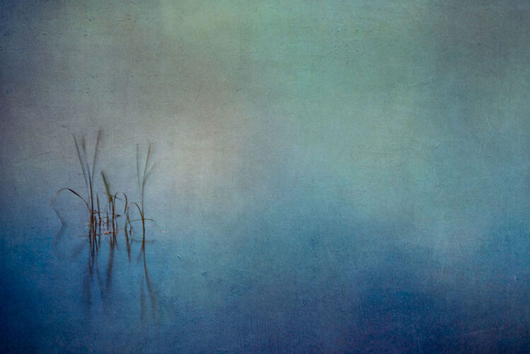 WATER AND REEDS